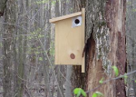 flying squirrel nesting box