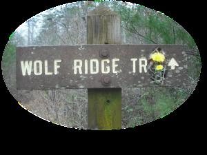 wolfridgesigncoltsfoot