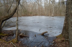 Frozen Pond #1