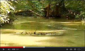 Watch this informative WLCS news report about the Mossy Creek restoration.