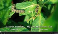 metamorphosisbyGail