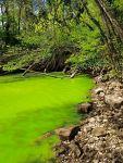 220px-Potomac_green_water
