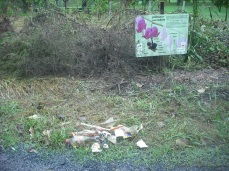 The garden is an effective trash collector during a water event.