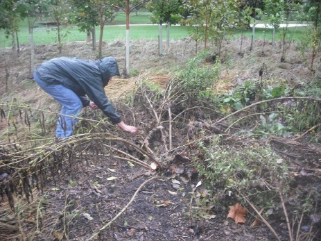 October 2, flattened garden from the Sept. 29 flood.
