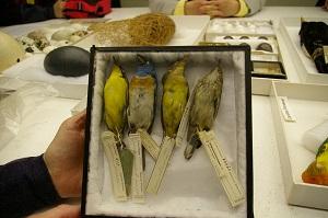 Auduboncollection.300