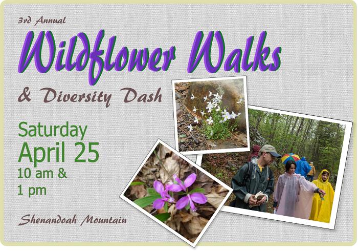 wildflowers.april2015.ws