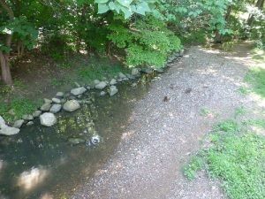 arboretumstream