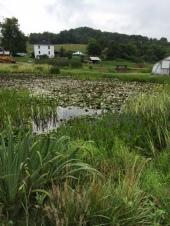 Springdale Water Gardens