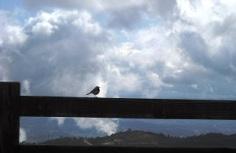 cloudswithbird