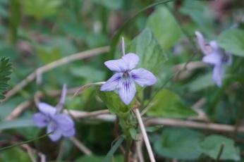 BP.violet.cd