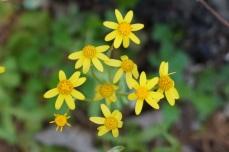 BP.yellow.cd