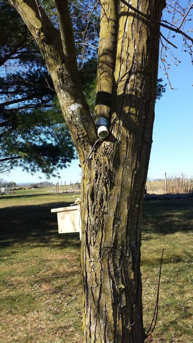 Two bee hotels on tree. Photo by Stephanie Gardner