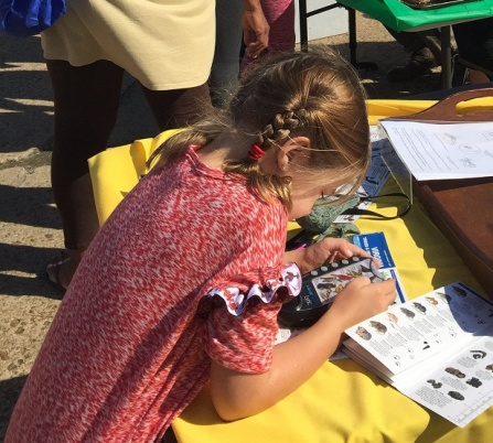 A festival-goer learns which birds make which calls at one of the HMN activity tables.