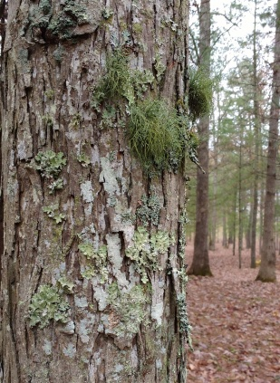 3types.lichenhike3.av