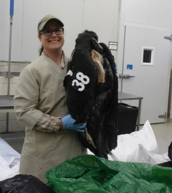 Christina Gebhard, a museum specialist in the Division of Birds at NMNH, shows condor with tag #38