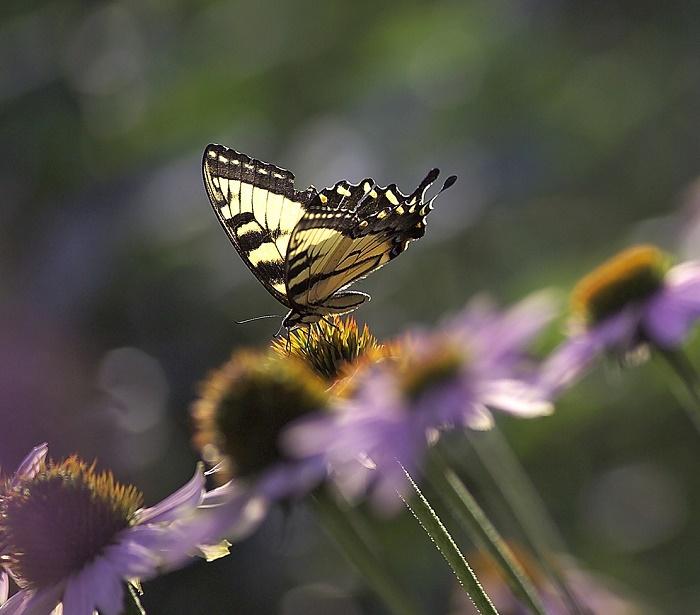 pollinator.pix